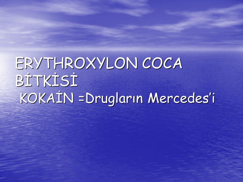 ERYTHROXYLON COCA BİTKİSİ KOKAİN =Drugların Mercedes'i