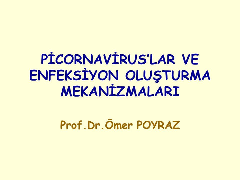 PİCORNAVİRUS'LAR VE ENFEKSİYON OLUŞTURMA MEKANİZMALARI Prof.Dr.Ömer POYRAZ
