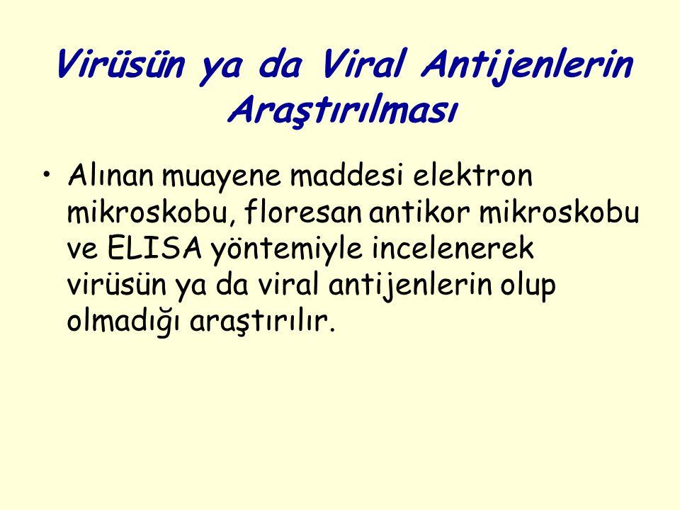 Virüsün ya da Viral Antijenlerin Araştırılması Alınan muayene maddesi elektron mikroskobu, floresan antikor mikroskobu ve ELISA yöntemiyle incelenerek virüsün ya da viral antijenlerin olup olmadığı araştırılır.