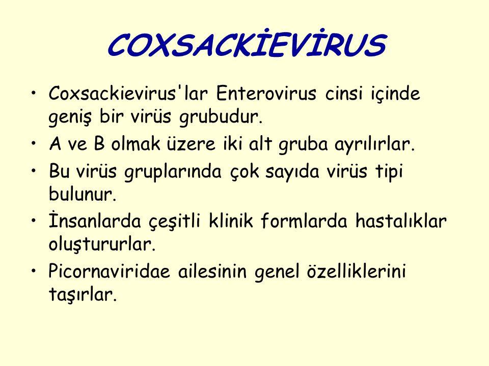 COXSACKİEVİRUS Coxsackievirus lar Enterovirus cinsi içinde geniş bir virüs grubudur.