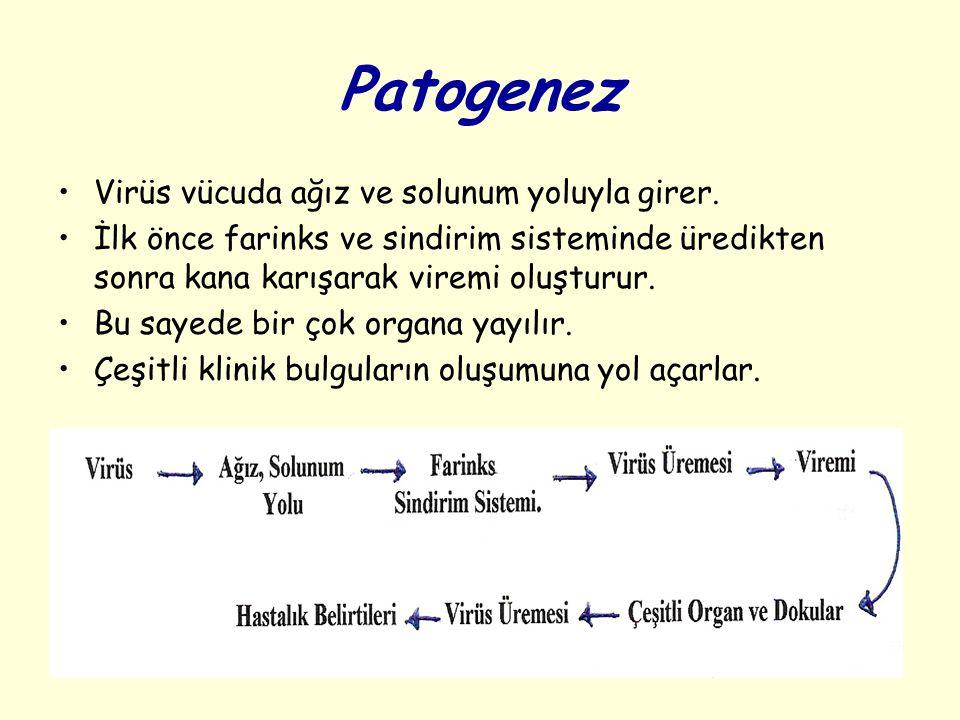 Patogenez Virüs vücuda ağız ve solunum yoluyla girer.