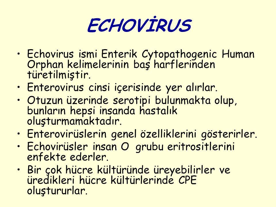 ECHOVİRUS Echovirus ismi Enterik Cytopathogenic Human Orphan kelimelerinin baş harflerinden türetilmiştir.