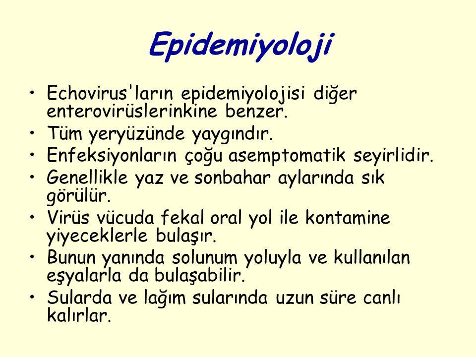 Epidemiyoloji Echovirus ların epidemiyolojisi diğer enterovirüslerinkine benzer.