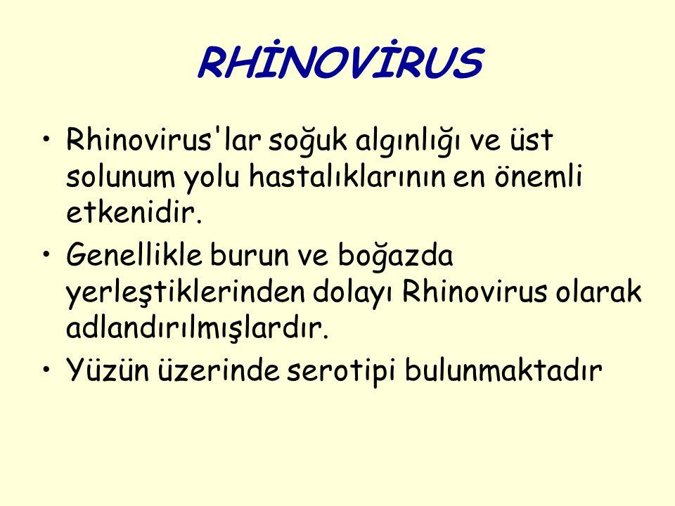 RHİNOVİRUS Rhinovirus lar soğuk algınlığı ve üst solunum yolu hastalıklarının en önemli etkenidir.