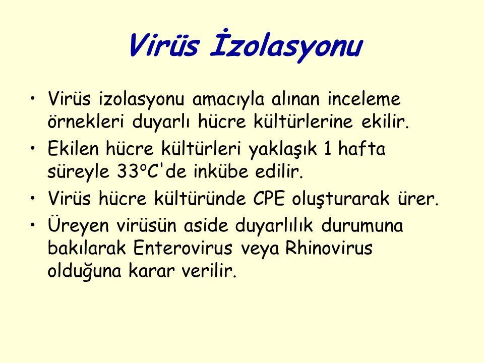 Virüs İzolasyonu Virüs izolasyonu amacıyla alınan inceleme örnekleri duyarlı hücre kültürlerine ekilir.