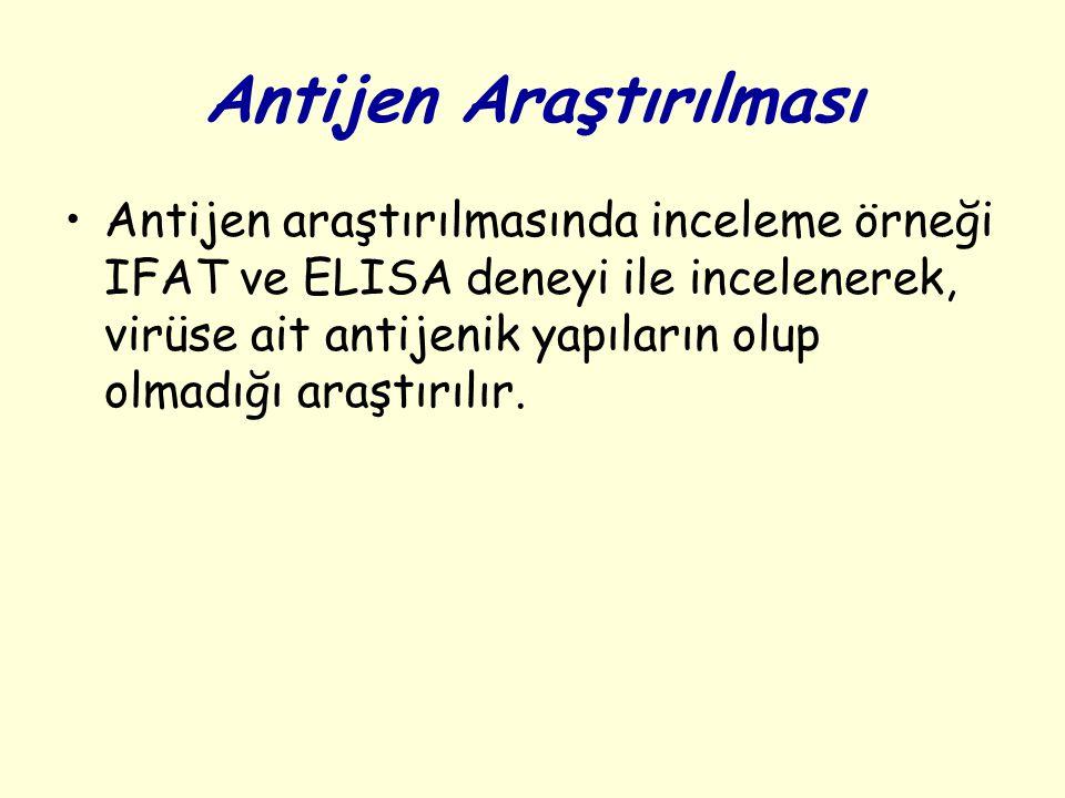 Antijen Araştırılması Antijen araştırılmasında inceleme örneği IFAT ve ELISA deneyi ile incelenerek, virüse ait antijenik yapıların olup olmadığı araştırılır.