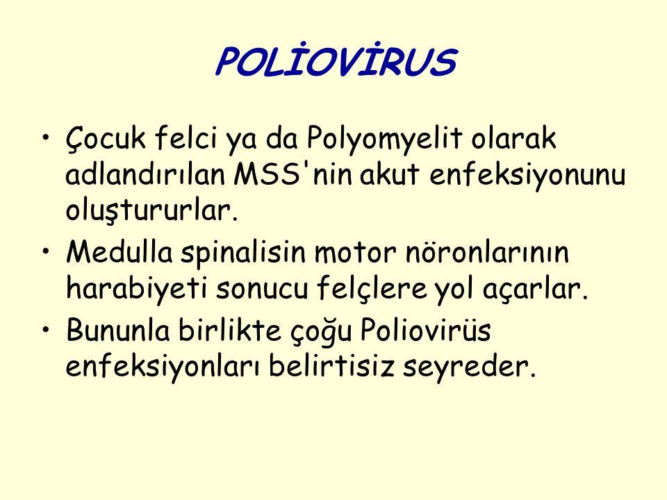 Genel Özellikleri Poliovirus lar morfolojik olarak Picornavirus ların genel özelliklerini gösterirler.