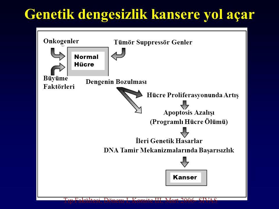 Genetik dengesizlik kansere yol açar Onkogenler Büyüme Faktörleri Dengenin Bozulması Hücre Proliferasyonunda Artış Apoptosis Azalışı (Programlı Hücre