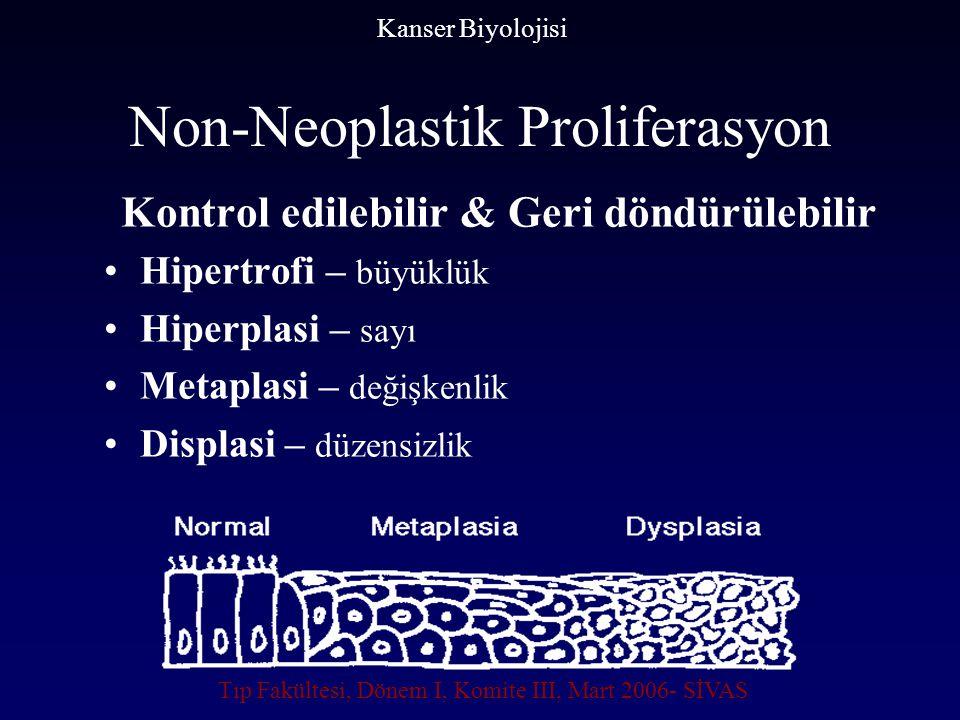 Non-Neoplastik Proliferasyon Kontrol edilebilir & Geri döndürülebilir Hipertrofi – büyüklük Hiperplasi – sayı Metaplasi – değişkenlik Displasi – düzen