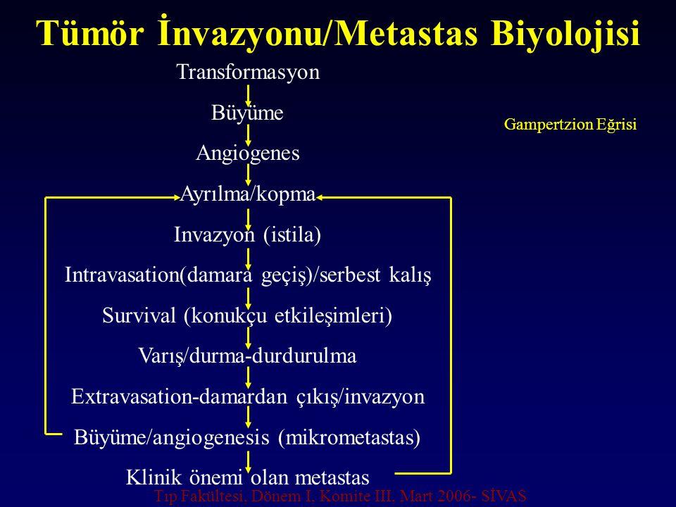 Tümör İnvazyonu/Metastas Biyolojisi Transformasyon Büyüme Angiogenes Ayrılma/kopma Invazyon (istila) Intravasation(damara geçiş)/serbest kalış Surviva