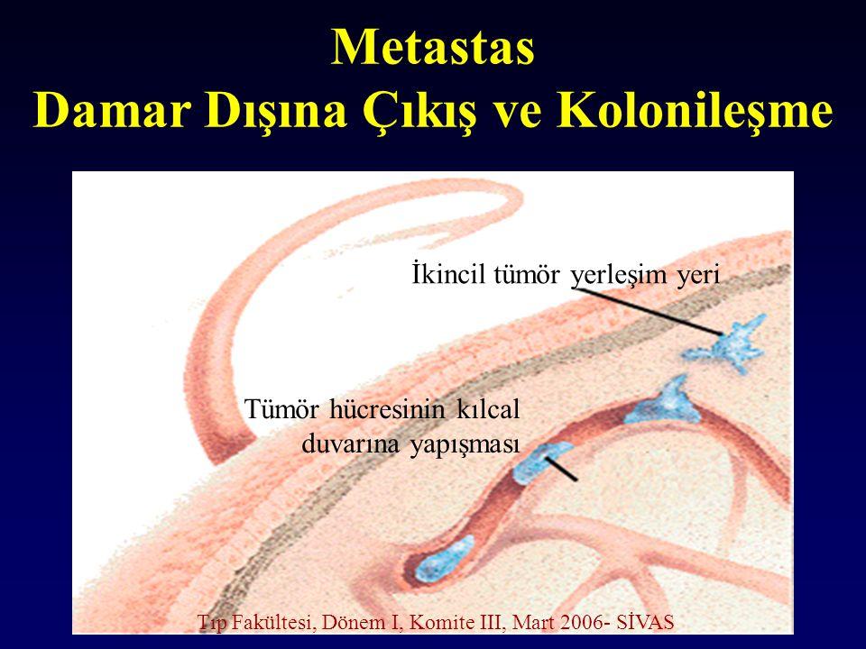 Metastas Damar Dışına Çıkış ve Kolonileşme İkincil tümör yerleşim yeri Tümör hücresinin kılcal duvarına yapışması Tıp Fakültesi, Dönem I, Komite III,