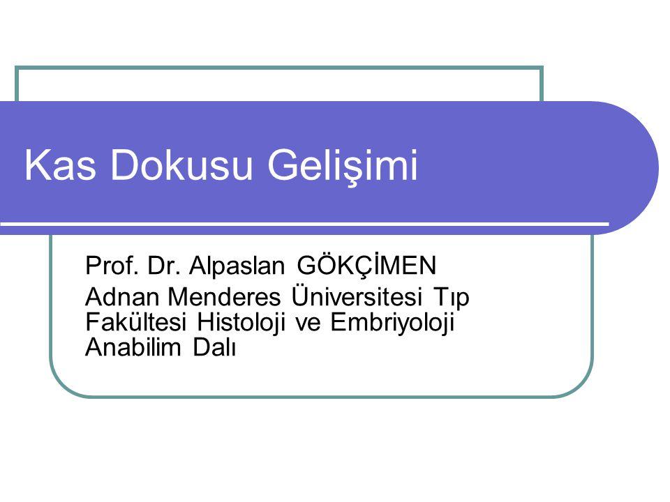 Kas Dokusu Gelişimi Prof. Dr. Alpaslan GÖKÇİMEN Adnan Menderes Üniversitesi Tıp Fakültesi Histoloji ve Embriyoloji Anabilim Dalı
