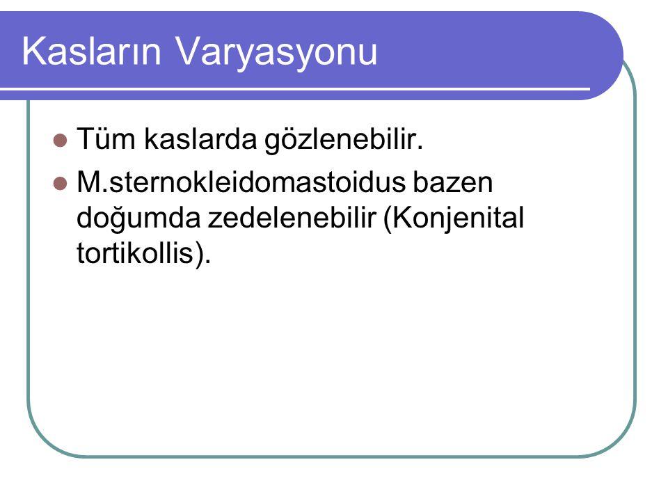 Kasların Varyasyonu Tüm kaslarda gözlenebilir. M.sternokleidomastoidus bazen doğumda zedelenebilir (Konjenital tortikollis).
