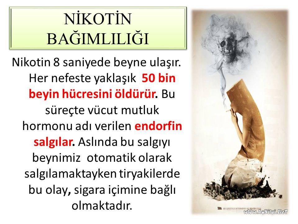 NİKOTİN BAĞIMLILIĞI Nikotin 8 saniyede beyne ulaşır. Her nefeste yaklaşık 50 bin beyin hücresini öldürür. Bu süreçte vücut mutluk hormonu adı verilen