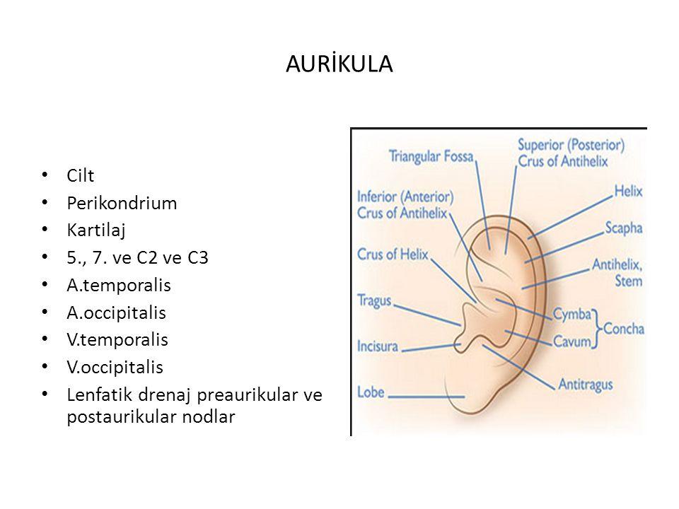 DIŞ KULAK KANALI 25-30 mm uzunluk 1/3 dış kısım kartilaj 2/3 medial kısım kemik Ön duvarı; mandibular fossa ve parotis bezi Alt duvar parotis bezi Arka duvar mastoid 5.,7.,9, ve 10.kranial sinir Arter, Ven ve lenfatikler aurikula ile aynıdır.