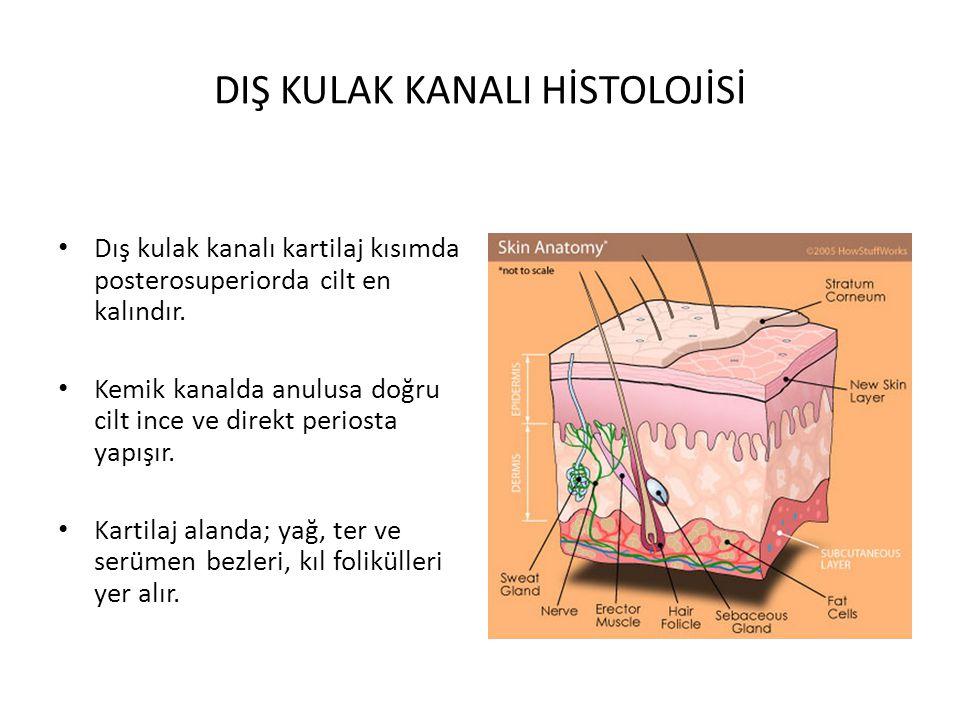 HEMATOM Travma Perikondrium ile kıkırdak arasında kan birikimi Mavimsi oldukça ağrılı şişlik Kartilajda nekroz (Kartilajın beslenmesi perikondriuma bağlı olduğundan)