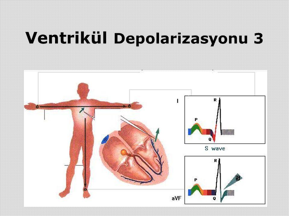 Ventrikül Depolarizasyonu 3