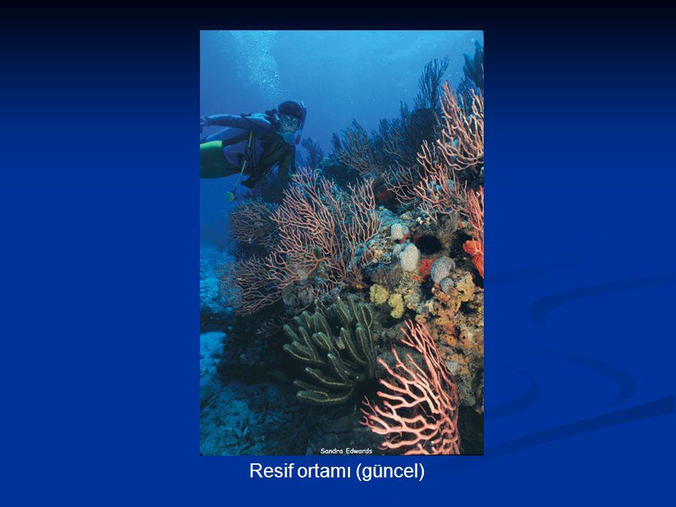 Resif ortamı (güncel)