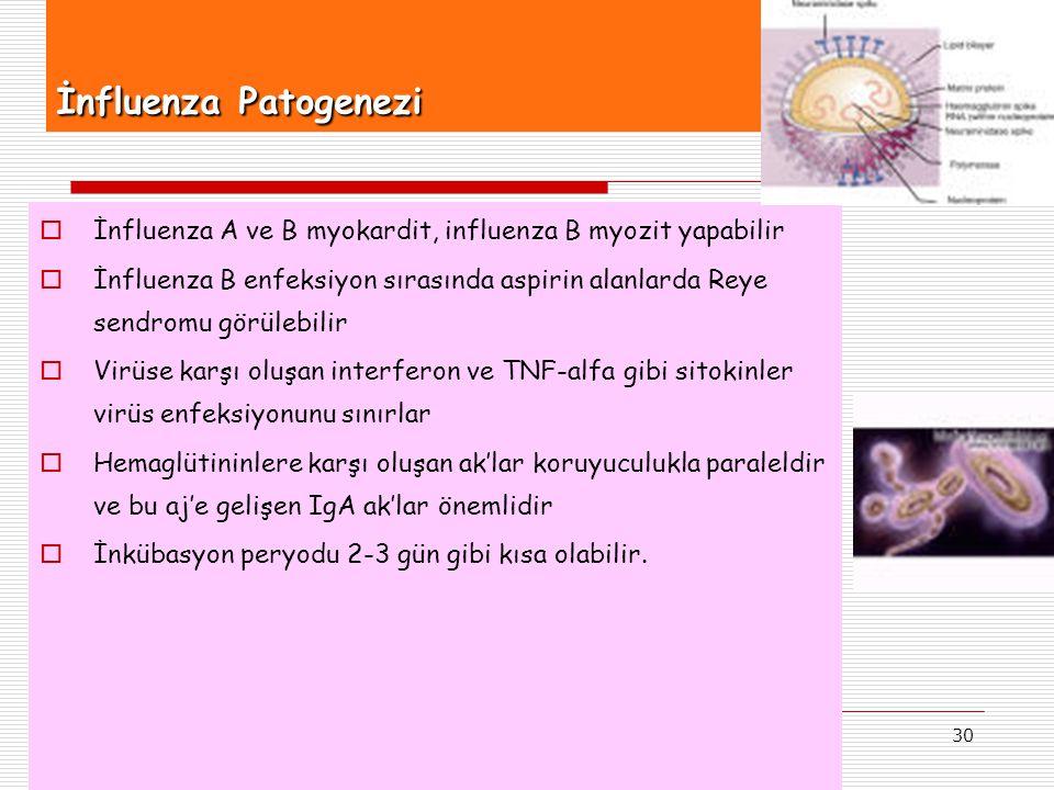 30 İnfluenza Patogenezi  İnfluenza A ve B myokardit, influenza B myozit yapabilir  İnfluenza B enfeksiyon sırasında aspirin alanlarda Reye sendromu görülebilir  Virüse karşı oluşan interferon ve TNF-alfa gibi sitokinler virüs enfeksiyonunu sınırlar  Hemaglütininlere karşı oluşan ak'lar koruyuculukla paraleldir ve bu aj'e gelişen IgA ak'lar önemlidir  İnkübasyon peryodu 2-3 gün gibi kısa olabilir.