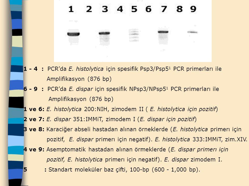 1 - 4 : PCR'da E. histolytica için spesifik Psp3/Psp5 1 PCR primerları ile Amplifikasyon (876 bp) 6 - 9 : PCR'da E. dispar için spesifik NPsp3/NPsp5 1