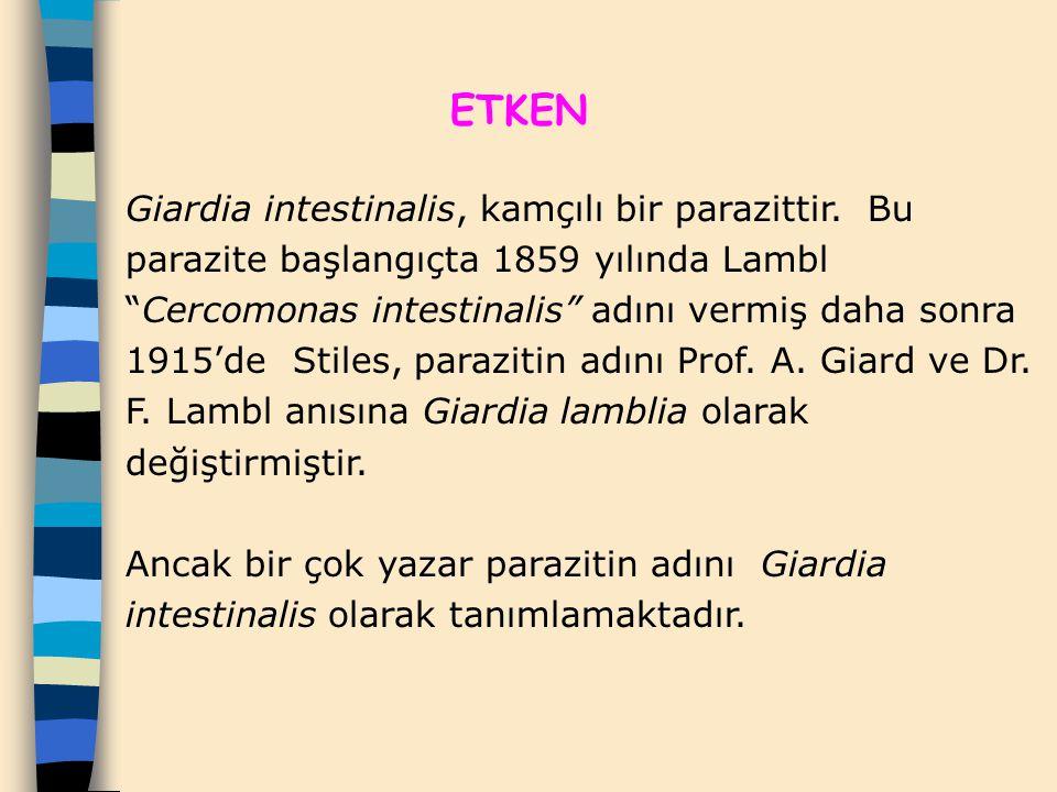 """ETKEN Giardia intestinalis, kamçılı bir parazittir. Bu parazite başlangıçta 1859 yılında Lambl """"Cercomonas intestinalis"""" adını vermiş daha sonra 1915'"""