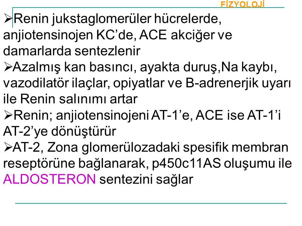  Renin jukstaglomerüler hücrelerde, anjiotensinojen KC'de, ACE akciğer ve damarlarda sentezlenir  Azalmış kan basıncı, ayakta duruş,Na kaybı, vazodi