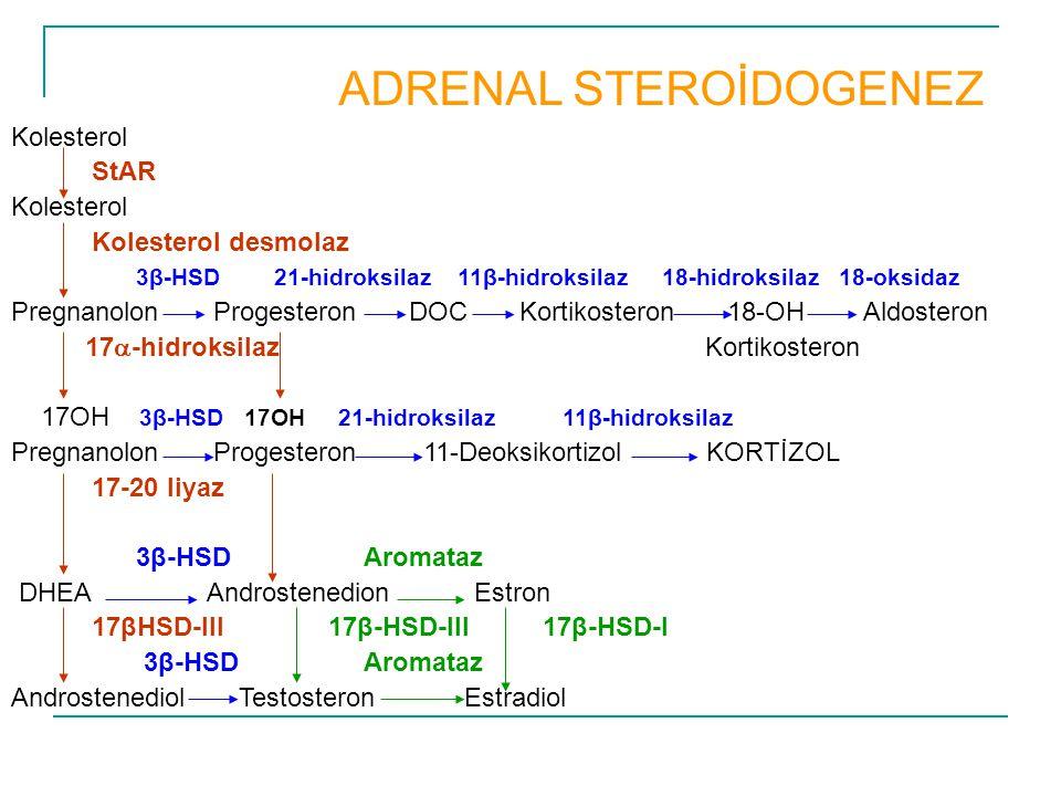 Kolesterol StAR Kolesterol Kolesterol desmolaz 3β-HSD 21-hidroksilaz 11β-hidroksilaz 18-hidroksilaz 18-oksidaz Pregnanolon Progesteron DOC Kortikoster