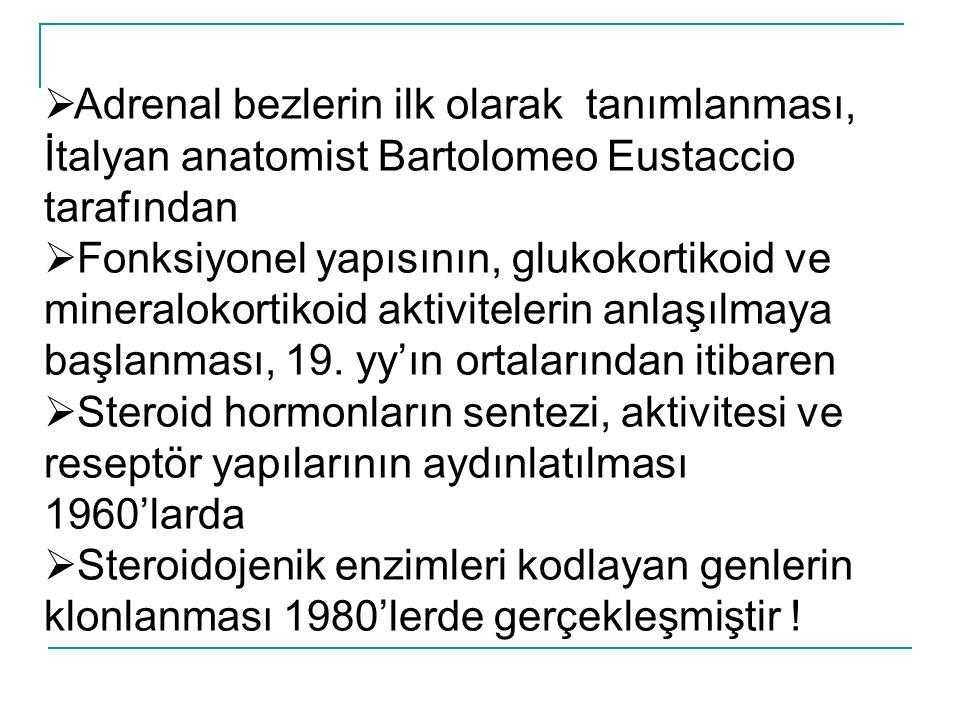  Adrenal bezlerin ilk olarak tanımlanması, İtalyan anatomist Bartolomeo Eustaccio tarafından  Fonksiyonel yapısının, glukokortikoid ve mineralokorti