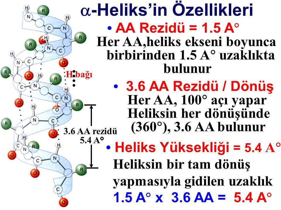 3.6 AA rezidü 5.4 A o H bağı  -Heliks'in Özellikleri AA Rezidü = 1.5 A  Her AA,heliks ekseni boyunca birbirinden 1.5 A  uzaklıkta bulunur Heliks Yü
