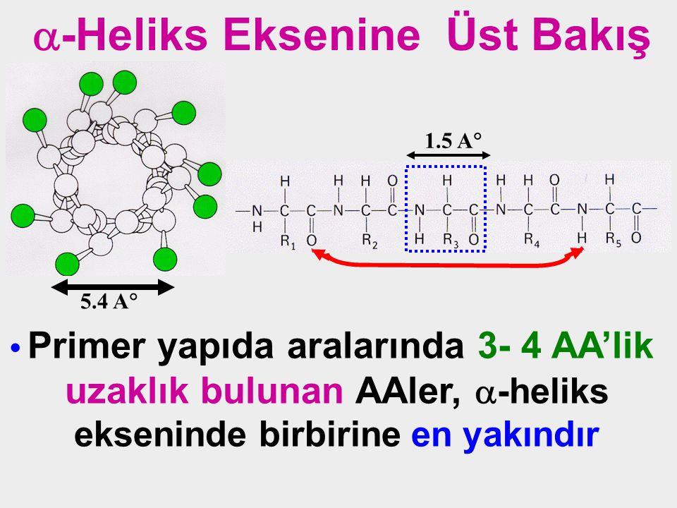 Primer yapıda aralarında 3- 4 AA'lik uzaklık bulunan AAler,  -heliks ekseninde birbirine en yakındır  -Heliks Eksenine Üst Bakış 5.4 A  1.5 A 