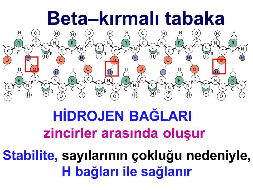 Beta–kırmalı tabaka Stabilite, sayılarının çokluğu nedeniyle, H bağları ile sağlanır HİDROJEN BAĞLARI zincirler arasında oluşur