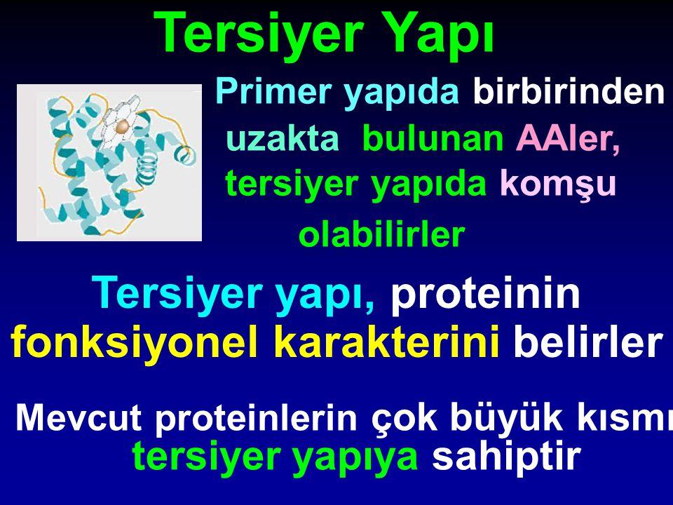 Tersiyer Yapı Primer yapıda birbirinden uzakta bulunan AAler, tersiyer yapıda komşu olabilirler Tersiyer yapı, proteinin fonksiyonel karakterini belir