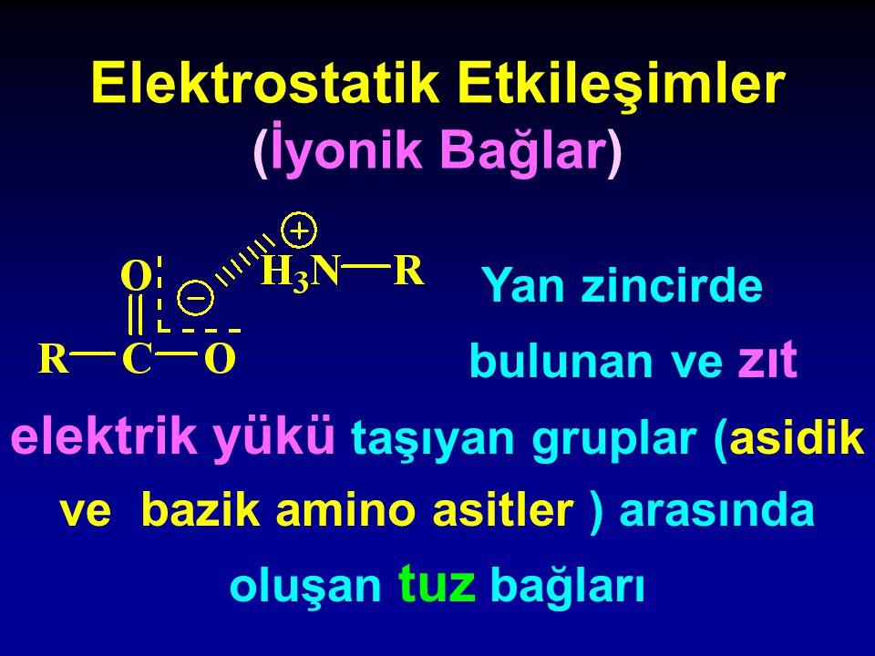 Elektrostatik Etkileşimler (İyonik Bağlar) Yan zincirde bulunan ve zıt elektrik yükü taşıyan gruplar (asidik ve bazik amino asitler ) arasında oluşan