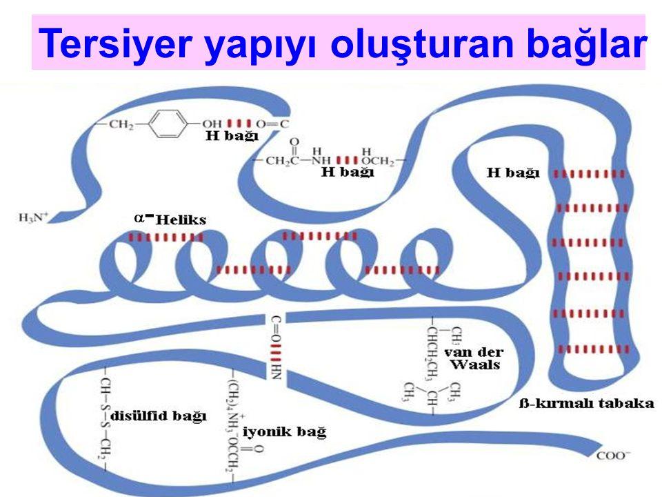 -- Tersiyer yapıyı oluşturan bağlar