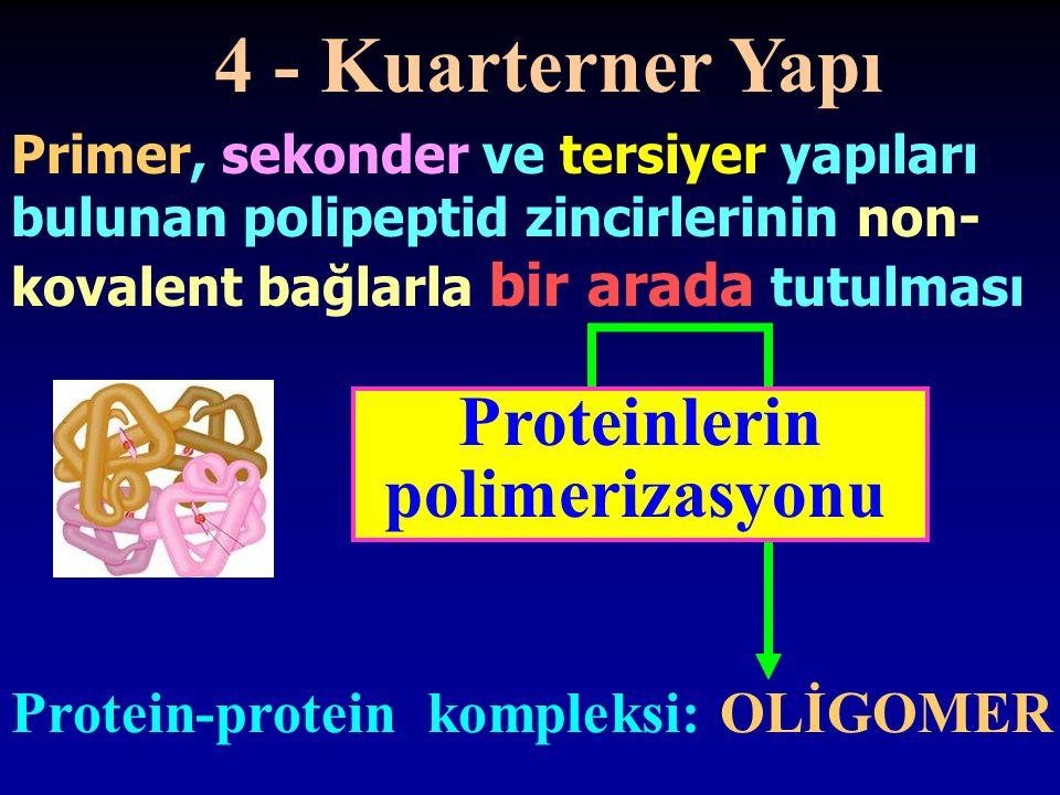4 - Kuarterner Yapı Primer, sekonder ve tersiyer yapıları bulunan polipeptid zincirlerinin non- kovalent bağlarla bir arada tutulması Proteinlerin pol