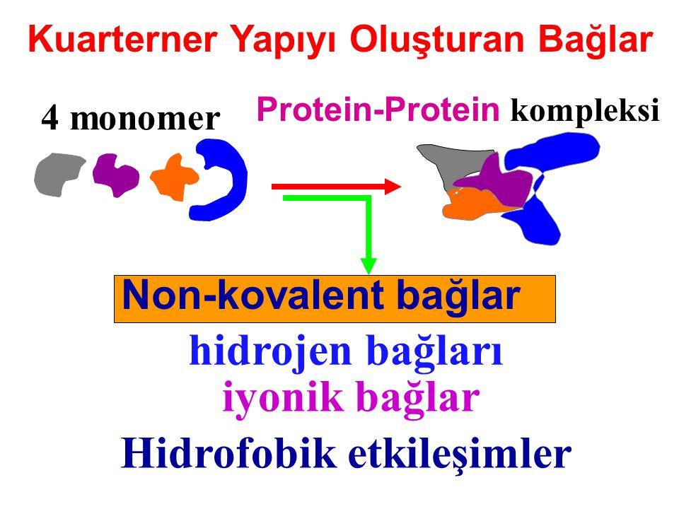 Kuarterner Yapıyı Oluşturan Bağlar 4 monomer Protein-Protein kompleksi Non-kovalent bağlar Hidrofobik etkileşimler hidrojen bağları iyonik bağlar