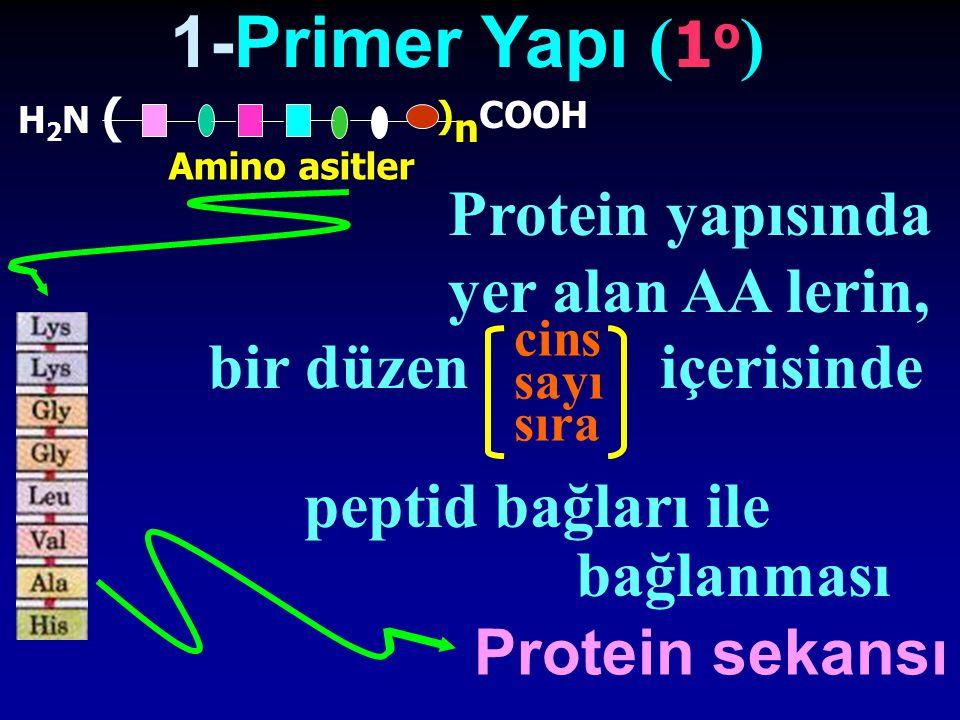 1-Primer Yapı ( 1 o ) H2N (H2N ( ) n COOH Amino asitler Protein yapısında yer alan AA lerin, bir düzen içerisinde peptid bağları ile bağlanması Protei