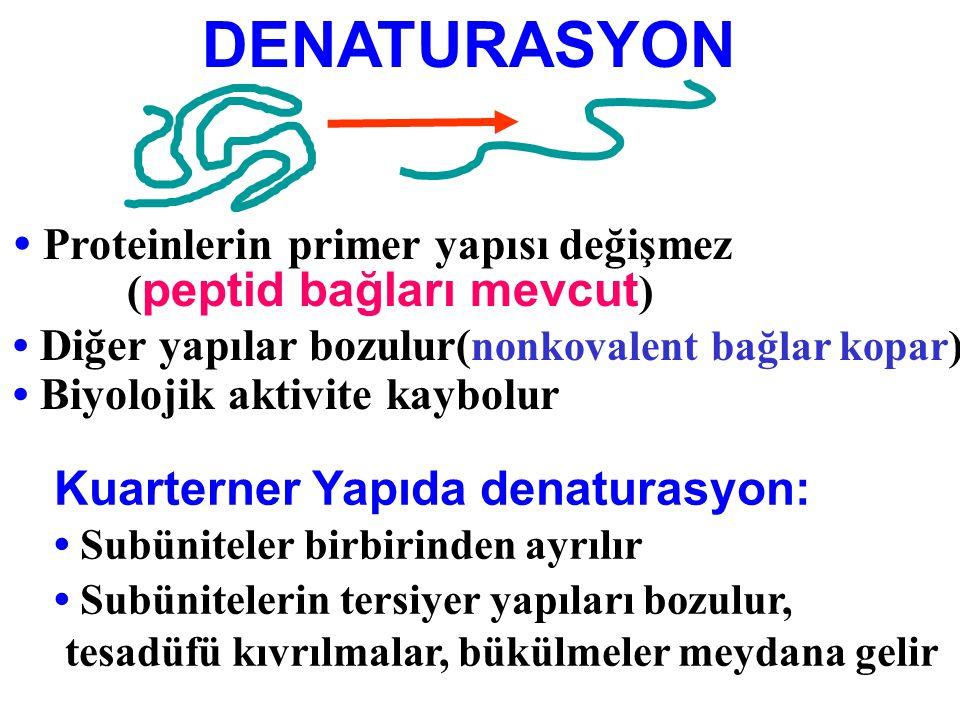 DENATURASYON Proteinlerin primer yapısı değişmez ( peptid bağları mevcut ) Diğer yapılar bozulur( nonkovalent bağlar kopar) Biyolojik aktivite kaybolu
