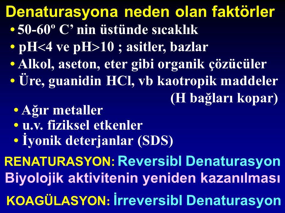 Denaturasyona neden olan faktörler 50-60º C' nin üstünde sıcaklık pH  4 ve pH  10 ; asitler, bazlar Alkol, aseton, eter gibi organik çözücüler Üre,