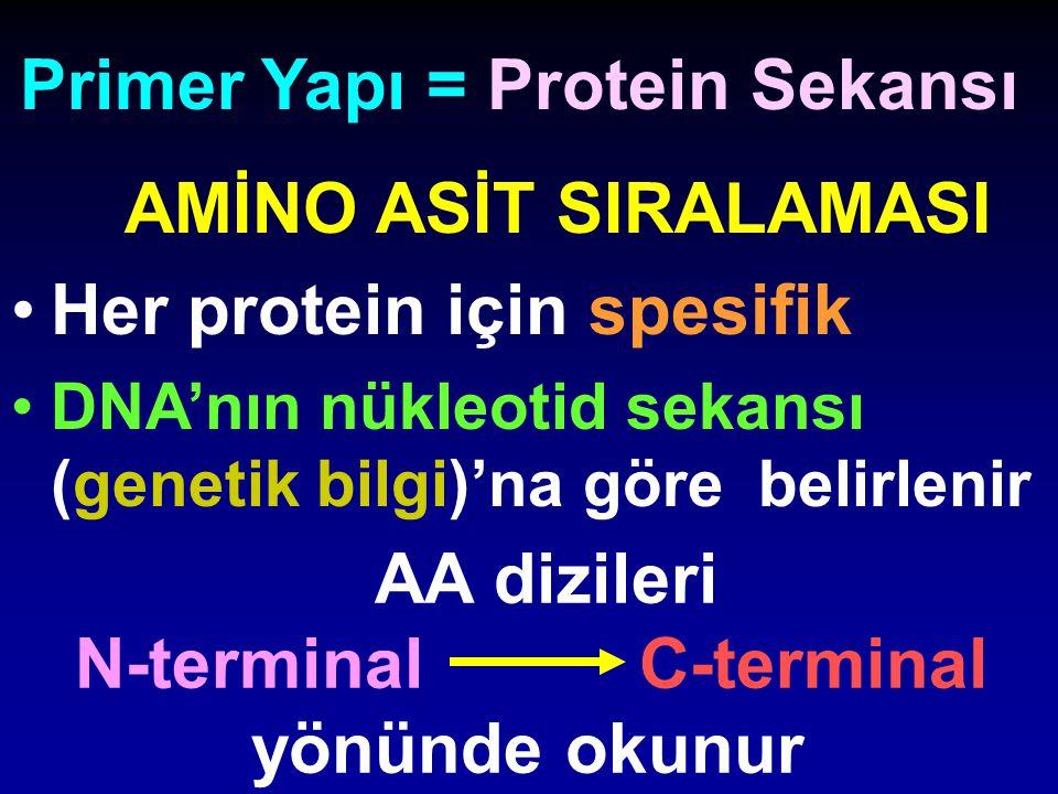 AMİNO ASİT SIRALAMASI Her protein için spesifik DNA'nın nükleotid sekansı (genetik bilgi)'na göre belirlenir Primer Yapı = Protein Sekansı AA dizileri