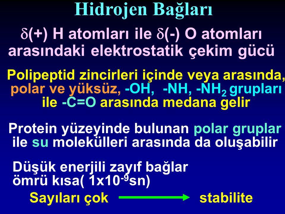 Hidrojen Bağları Polipeptid zincirleri içinde veya arasında, polar ve yüksüz, -OH, -NH, -NH 2 grupları ile -C=O arasında medana gelir  (+) H atomları