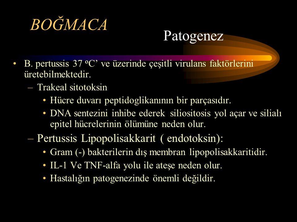BOĞMACA B. pertussis 37 o C' ve üzerinde çeşitli virulans faktörlerini üretebilmektedir. –Trakeal sitotoksin Hücre duvarı peptidoglikanının bir parças