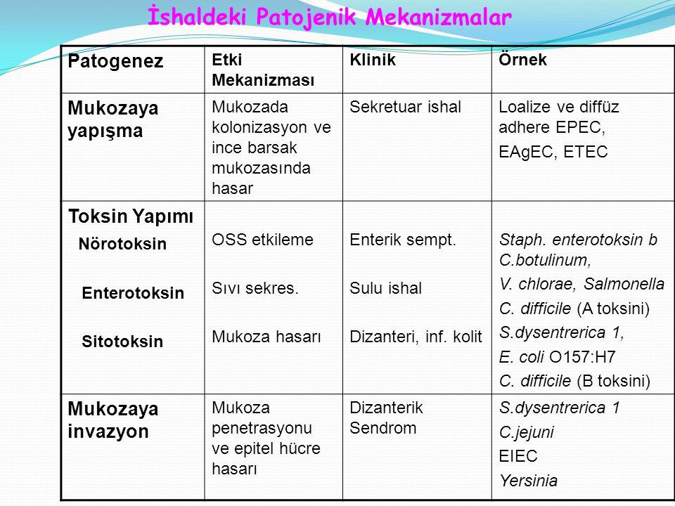İshaldeki Patojenik Mekanizmalar Patogenez Etki Mekanizması KlinikÖrnek Mukozaya yapışma Mukozada kolonizasyon ve ince barsak mukozasında hasar Sekretuar ishalLoalize ve diffüz adhere EPEC, EAgEC, ETEC Toksin Yapımı Nörotoksin Enterotoksin Sitotoksin OSS etkileme Sıvı sekres.