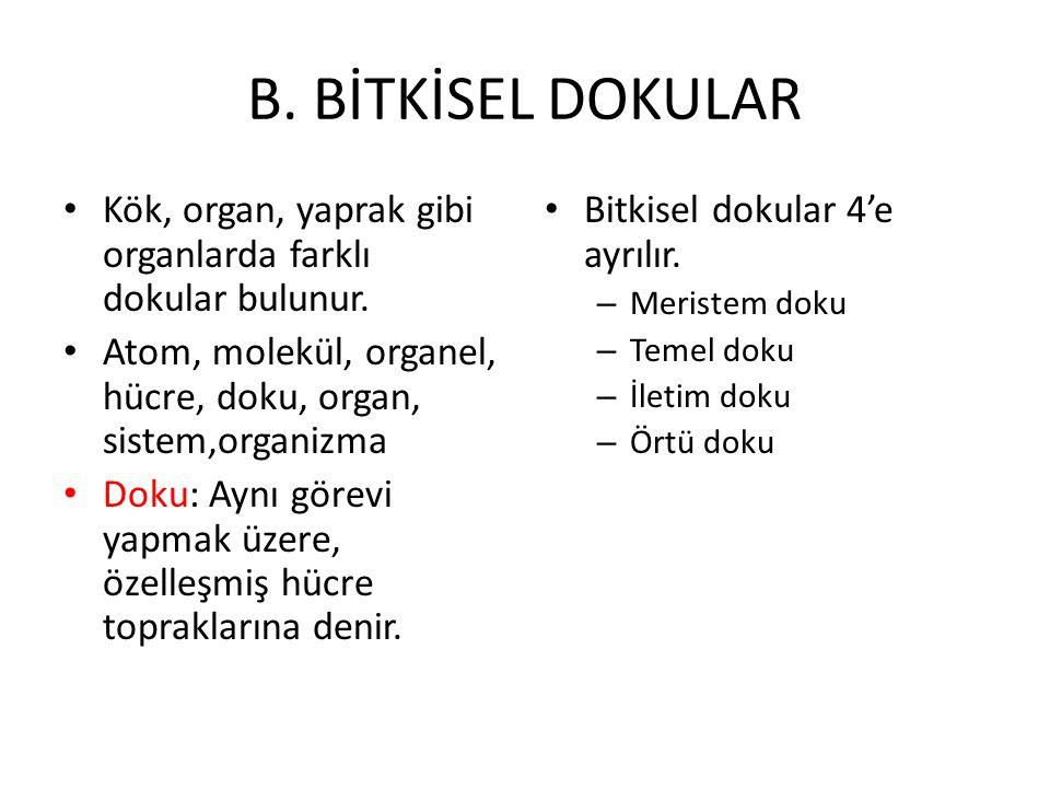 B. BİTKİSEL DOKULAR Kök, organ, yaprak gibi organlarda farklı dokular bulunur. Atom, molekül, organel, hücre, doku, organ, sistem,organizma Doku: Aynı
