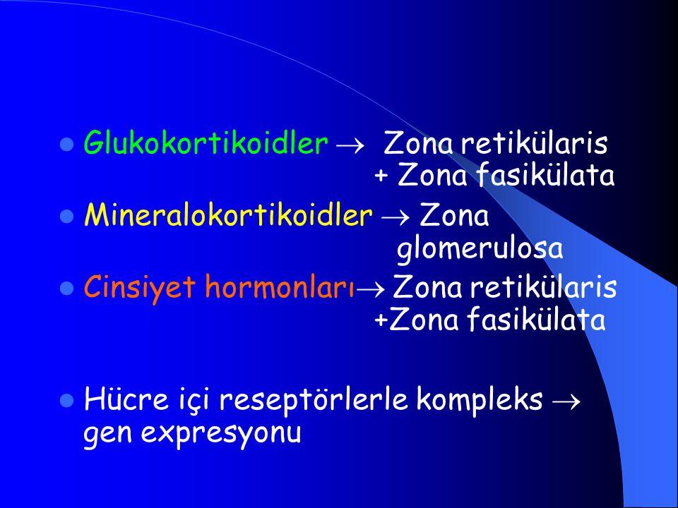 Glukokortikoidler  Zona retikülaris + Zona fasikülata Mineralokortikoidler  Zona glomerulosa Cinsiyet hormonları  Zona retikülaris +Zona fasikülata