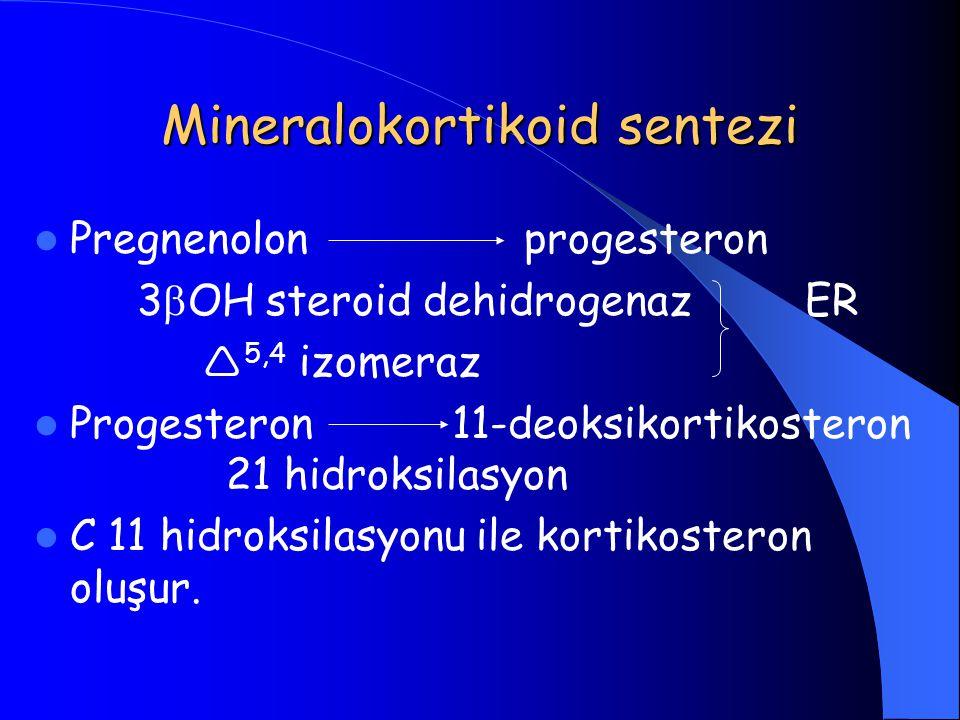 Mineralokortikoid sentezi Pregnenolon progesteron 3  OH steroid dehidrogenaz ER  5,4 izomeraz Progesteron 11-deoksikortikosteron 21 hidroksilasyon C