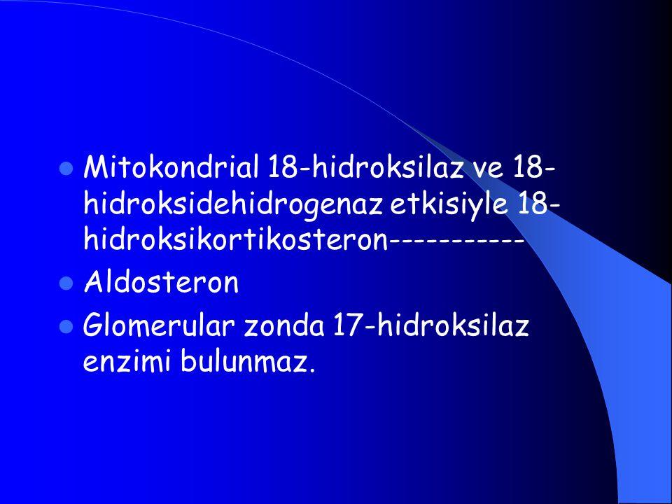 Mitokondrial 18-hidroksilaz ve 18- hidroksidehidrogenaz etkisiyle 18- hidroksikortikosteron----------- Aldosteron Glomerular zonda 17-hidroksilaz enzi
