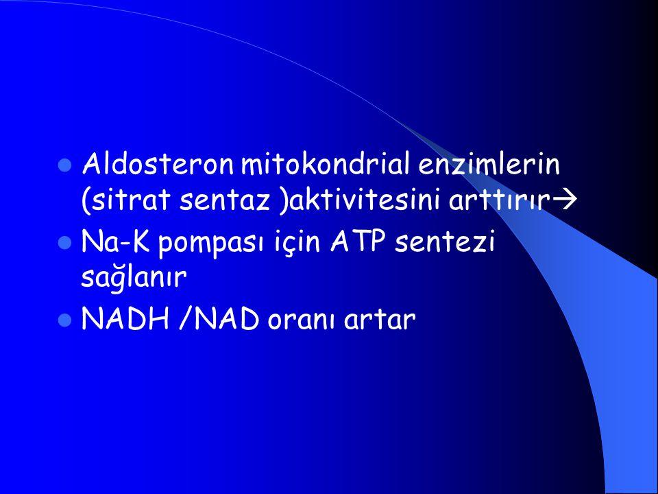 Aldosteron mitokondrial enzimlerin (sitrat sentaz )aktivitesini arttırır  Na-K pompası için ATP sentezi sağlanır NADH /NAD oranı artar