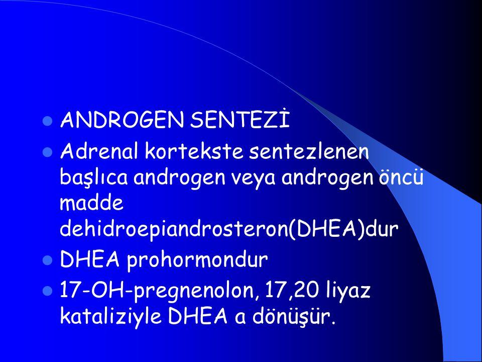 ANDROGEN SENTEZİ Adrenal kortekste sentezlenen başlıca androgen veya androgen öncü madde dehidroepiandrosteron(DHEA)dur DHEA prohormondur 17-OH-pregne