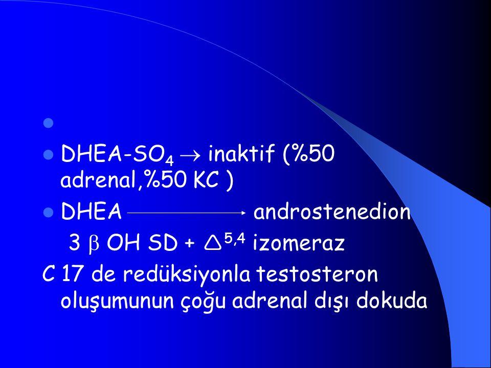 DHEA-SO 4  inaktif (%50 adrenal,%50 KC ) DHEA androstenedion 3  OH SD +  5,4 izomeraz C 17 de redüksiyonla testosteron oluşumunun çoğu adrenal dışı